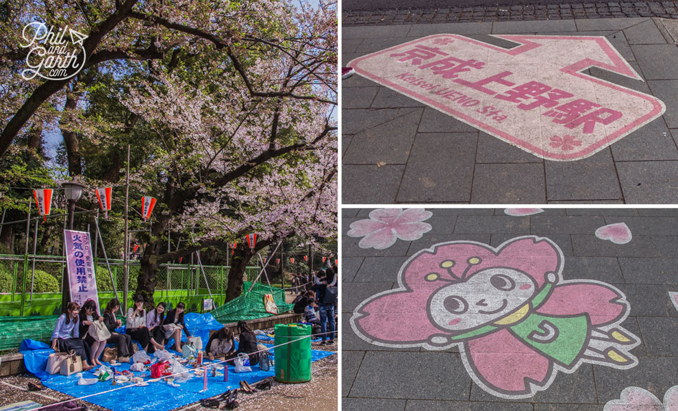 Tokyo_cherry_blossom_viewing_2_hanami_travel_review_and_video