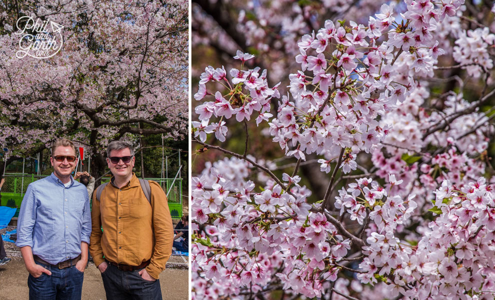 Tokyo_cherry_blossom_viewing_hanami_travel_review_and_video