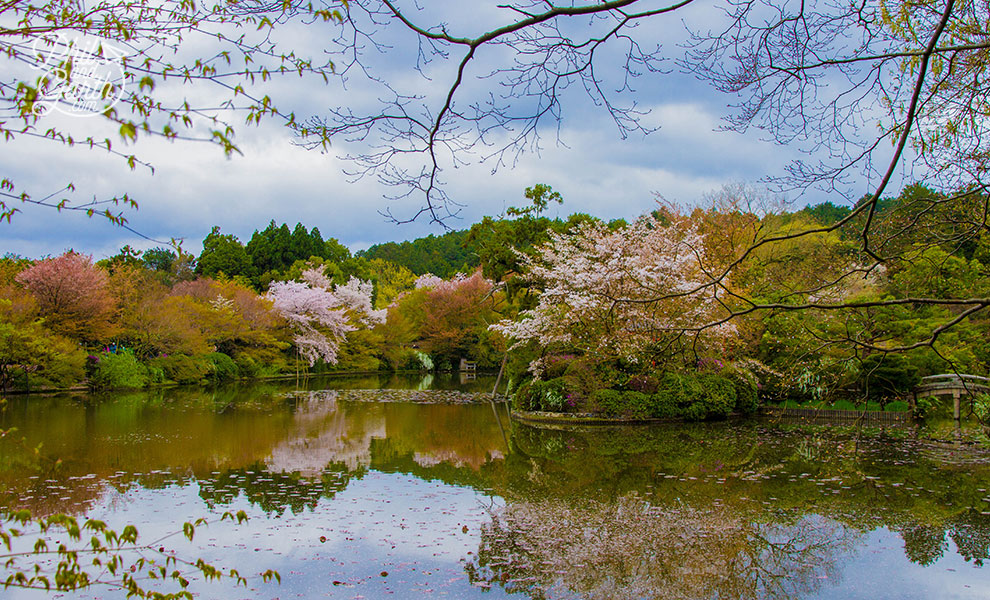 kyoto_japan_Ryoanji_Temple_pond_travel_review_and_quick_video