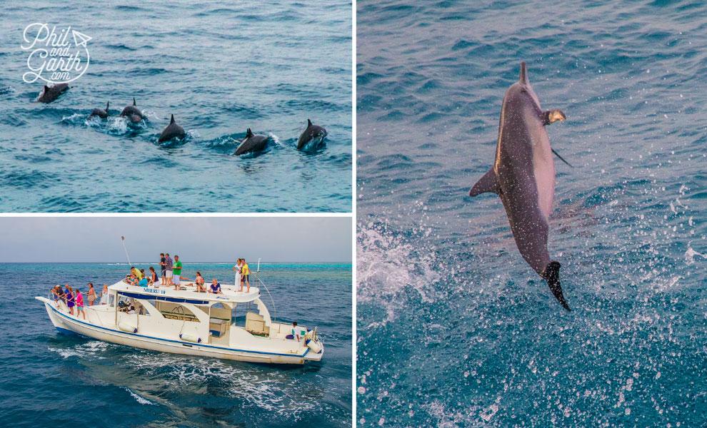 meeru_island_resort_dolphin_watching
