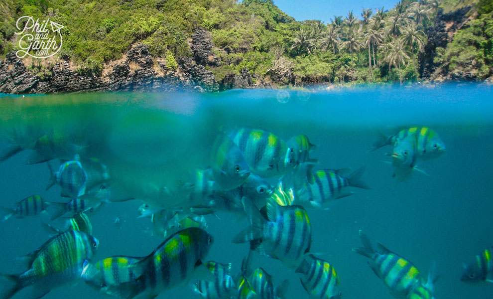 Phuket_Ko_Phi_Phi_Don_Nui_Bay_Snorkelling_2_travel_review