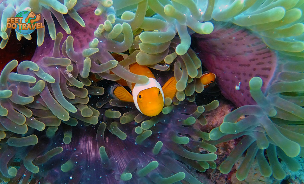 Looking for Nemo? Find him scuba diving in Mabul