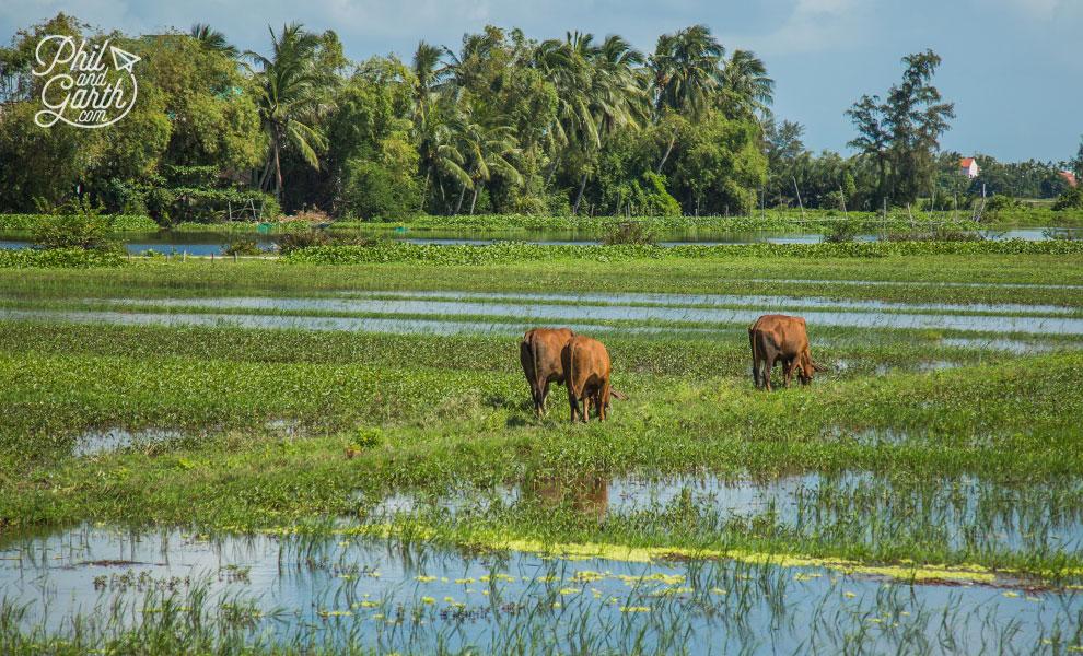Countryside near Hoi An