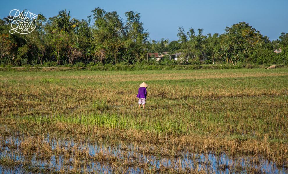 Rice farmer in Hue countryside