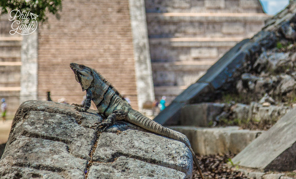 The Platform of Venus - where iguanas are the latest residents of Chichen Itza