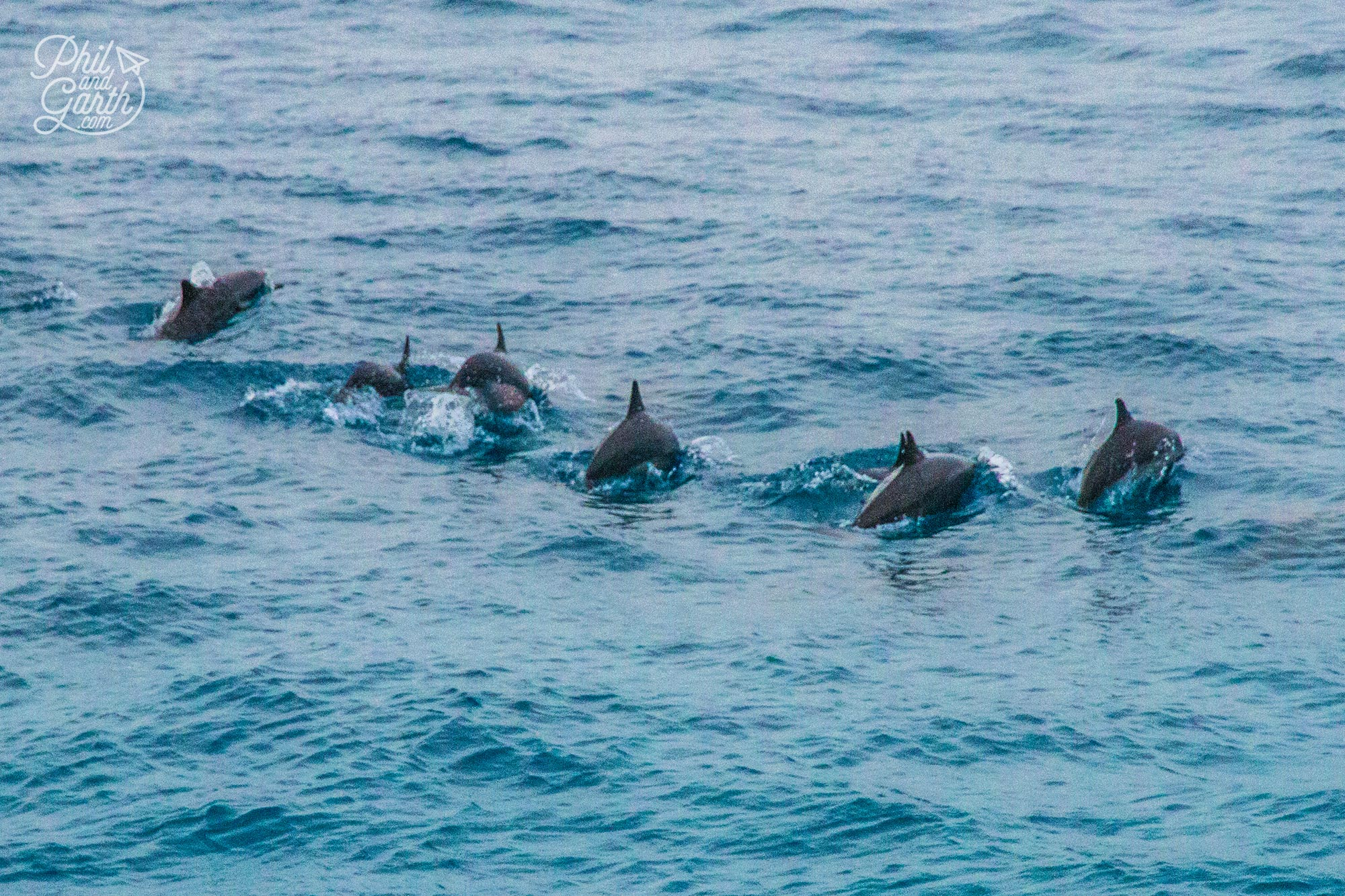 How wonderful - a pod of dolphins!
