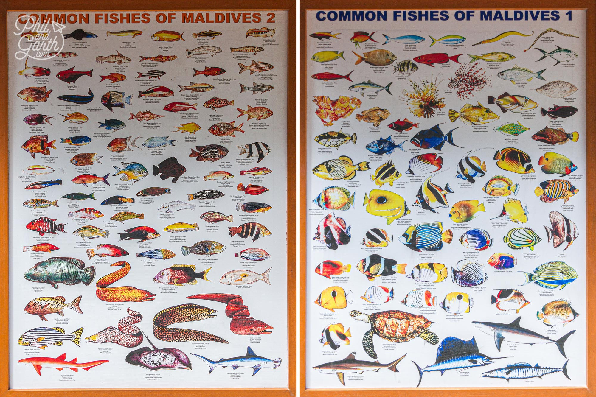 Meeru's posters point out all the different fishes to spot whilst snorkelling