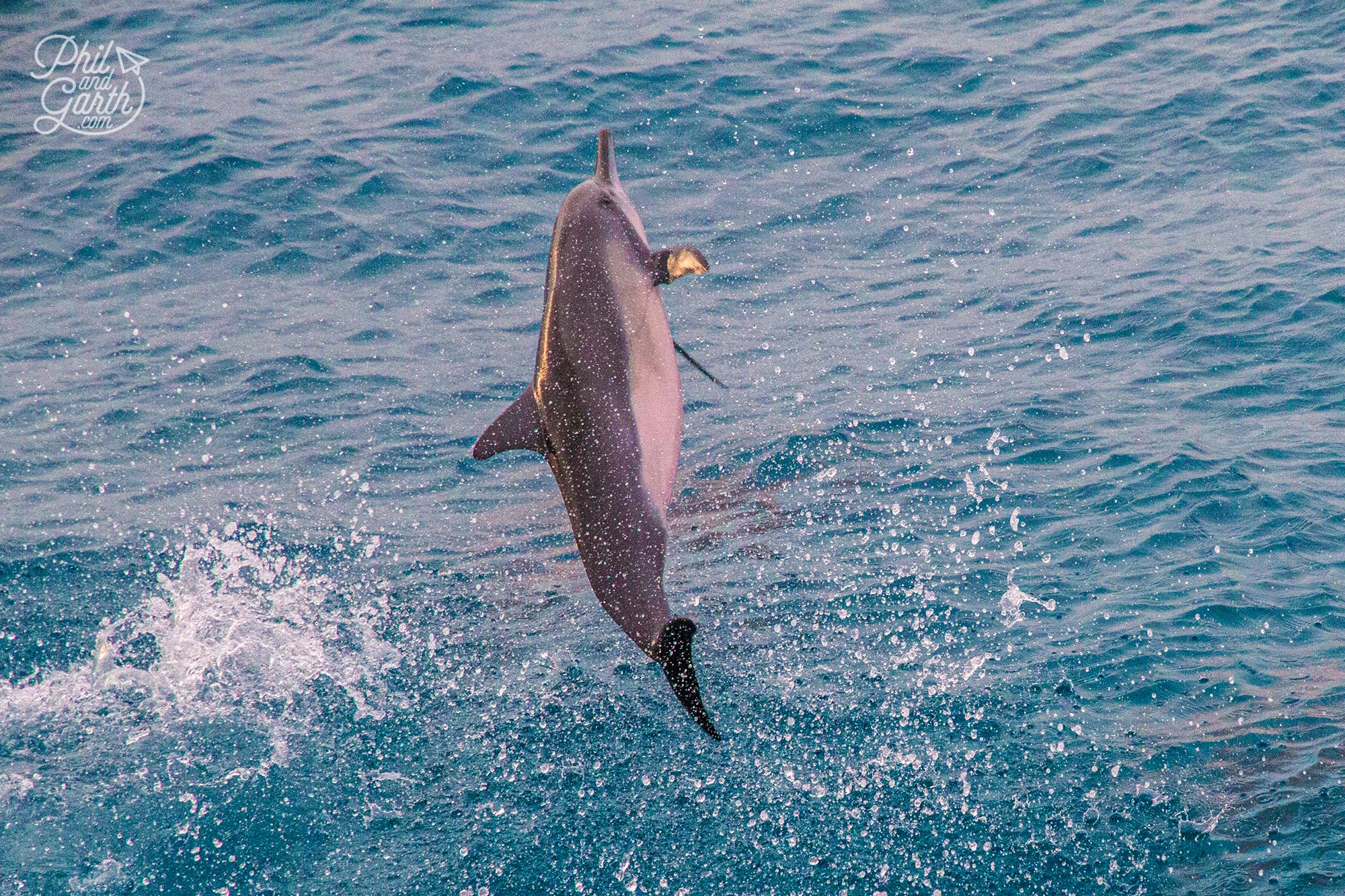 So lucky to witness dolphins leaping out of the water and having fun