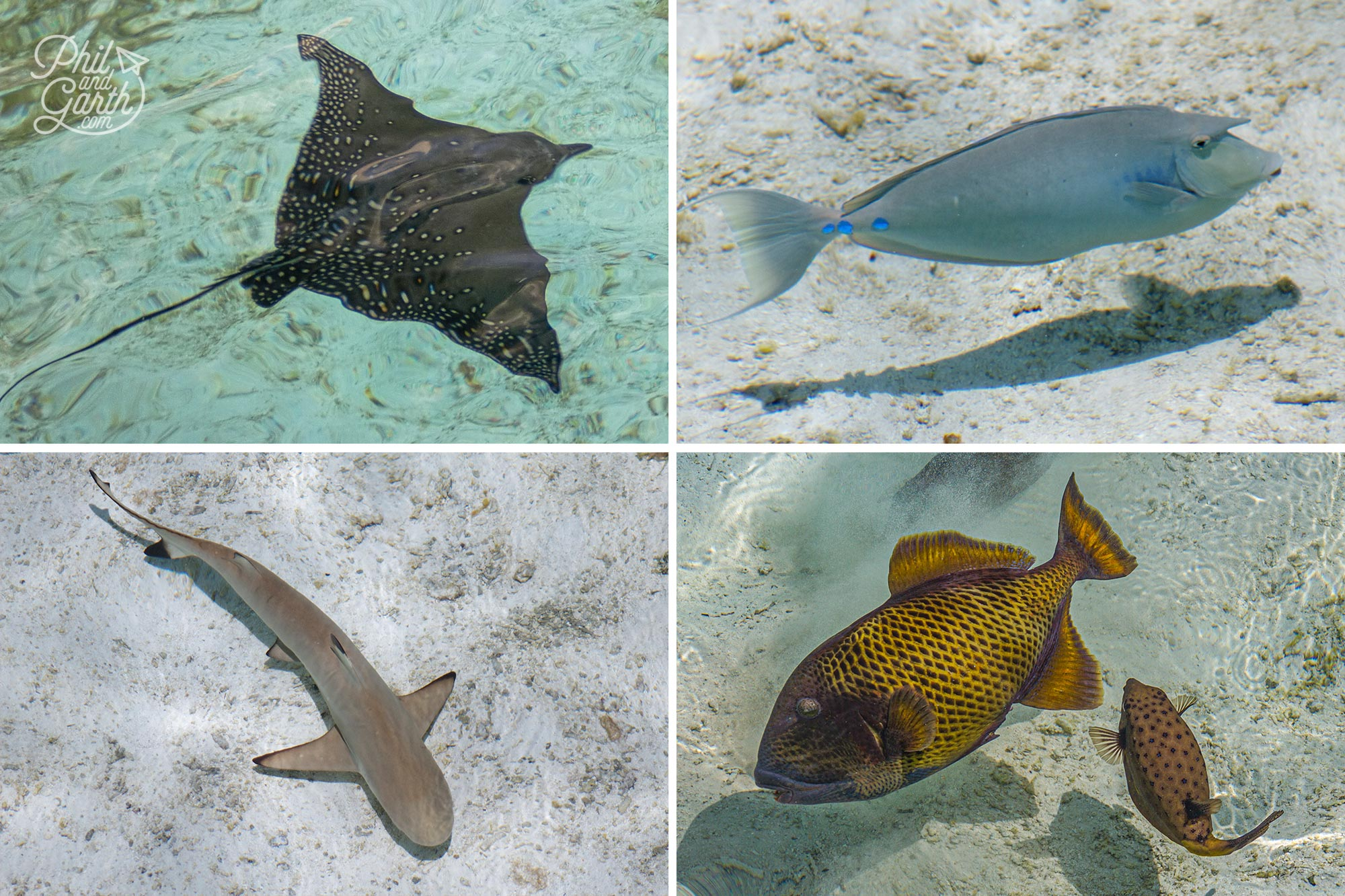 Some of the marine life you can see just looking down at the water