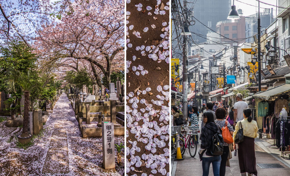 Tokyo_Yanaka_district_2_travel_review_and_video