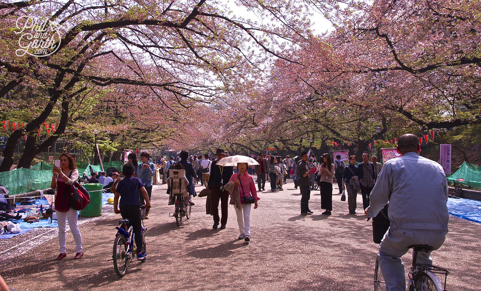 Tokyo_cherry_blossom_people_culture_travel_review_and_video