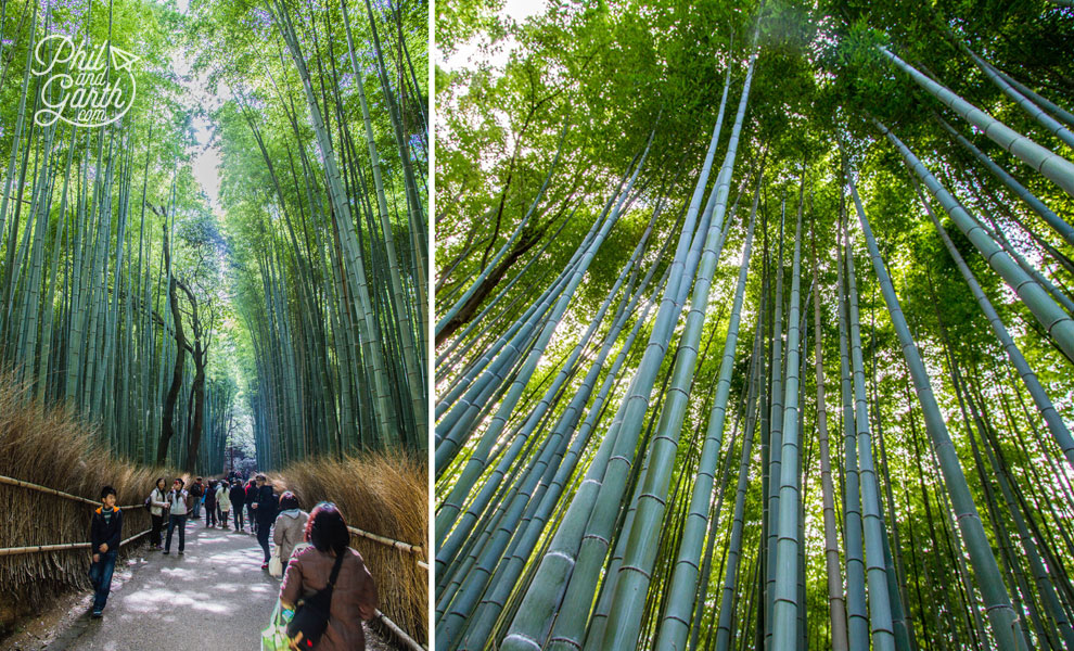 kyoto_japan_Arayshima_Bamboo_Forest_travel_review_and_quick_video