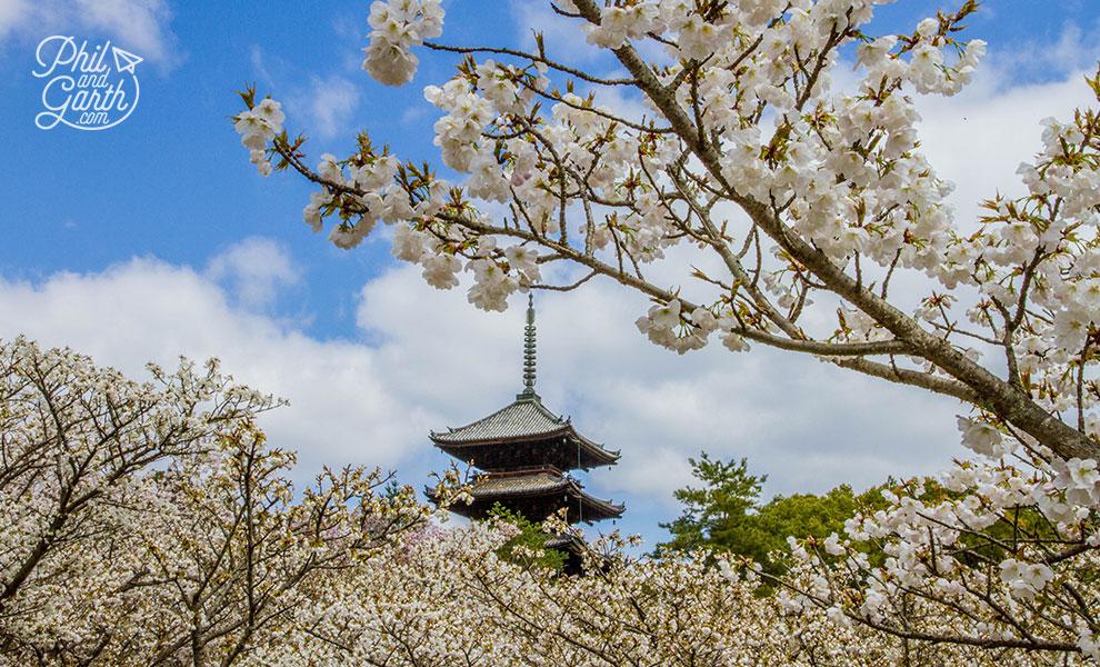 kyoto_japan_Ninnaji_Temple_Omuro_Cherries_travel_review_and_quick_video