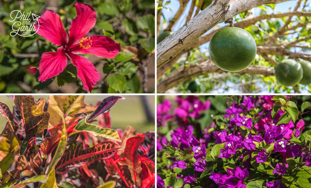 Cuba_Blau_Privilege_Cayo_Libertad_varadero_gardens_3_travel_review_and_video