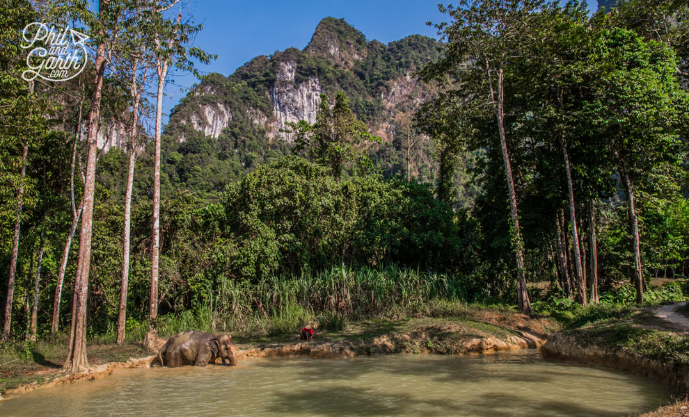 khao_sok_elephant_hills_elephant_bathes_muddy_water_2_travel_review_and_video