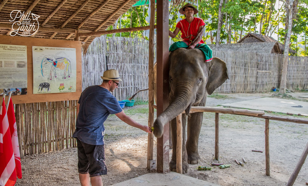 khao_sok_elephant_hills_garth_feeding_the_elephants_travel_review_and_video
