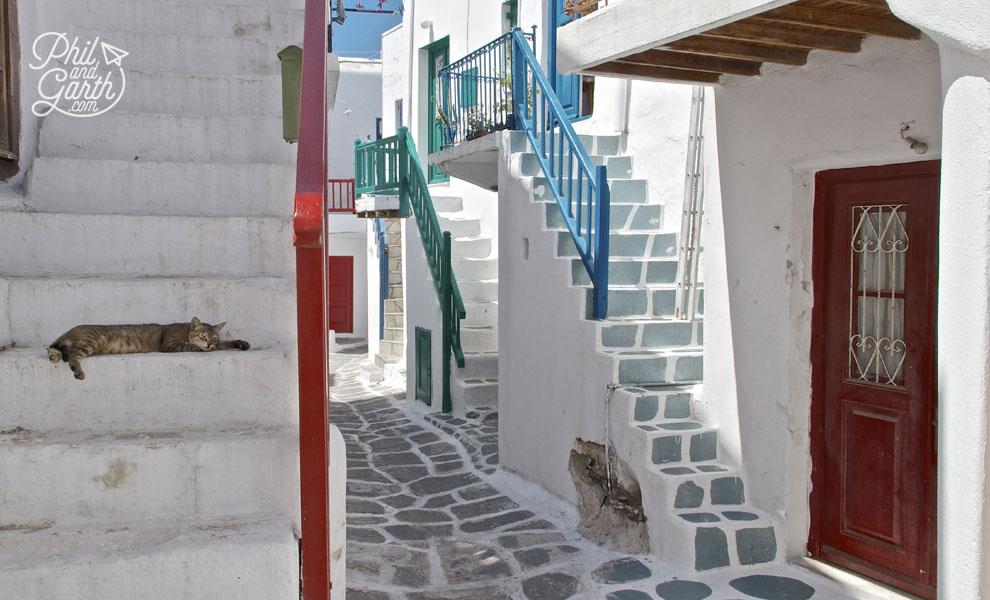 A lazy cat in Mykonos Town