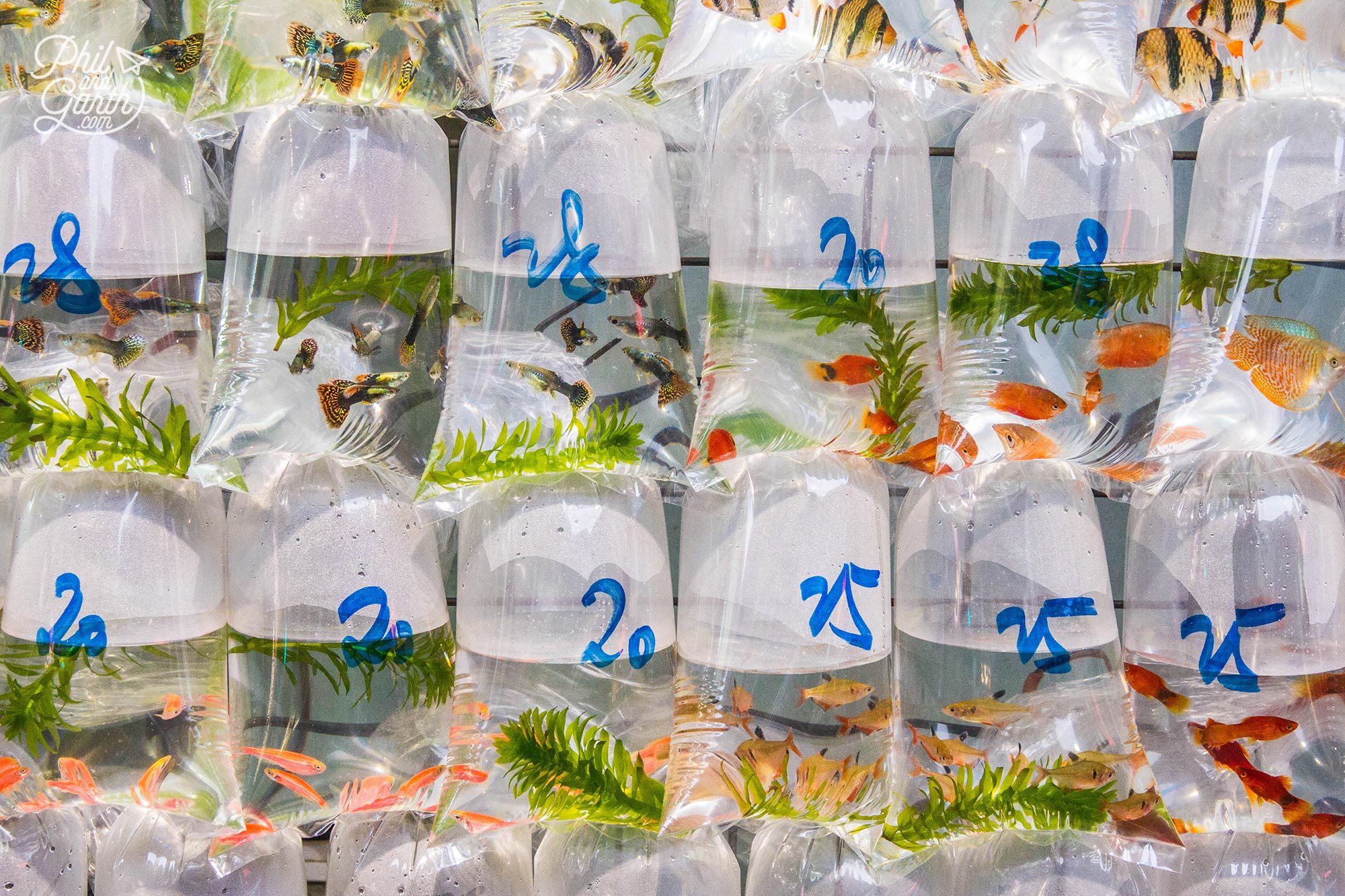 Bagged goldfish and tropical fish in Mong Kok