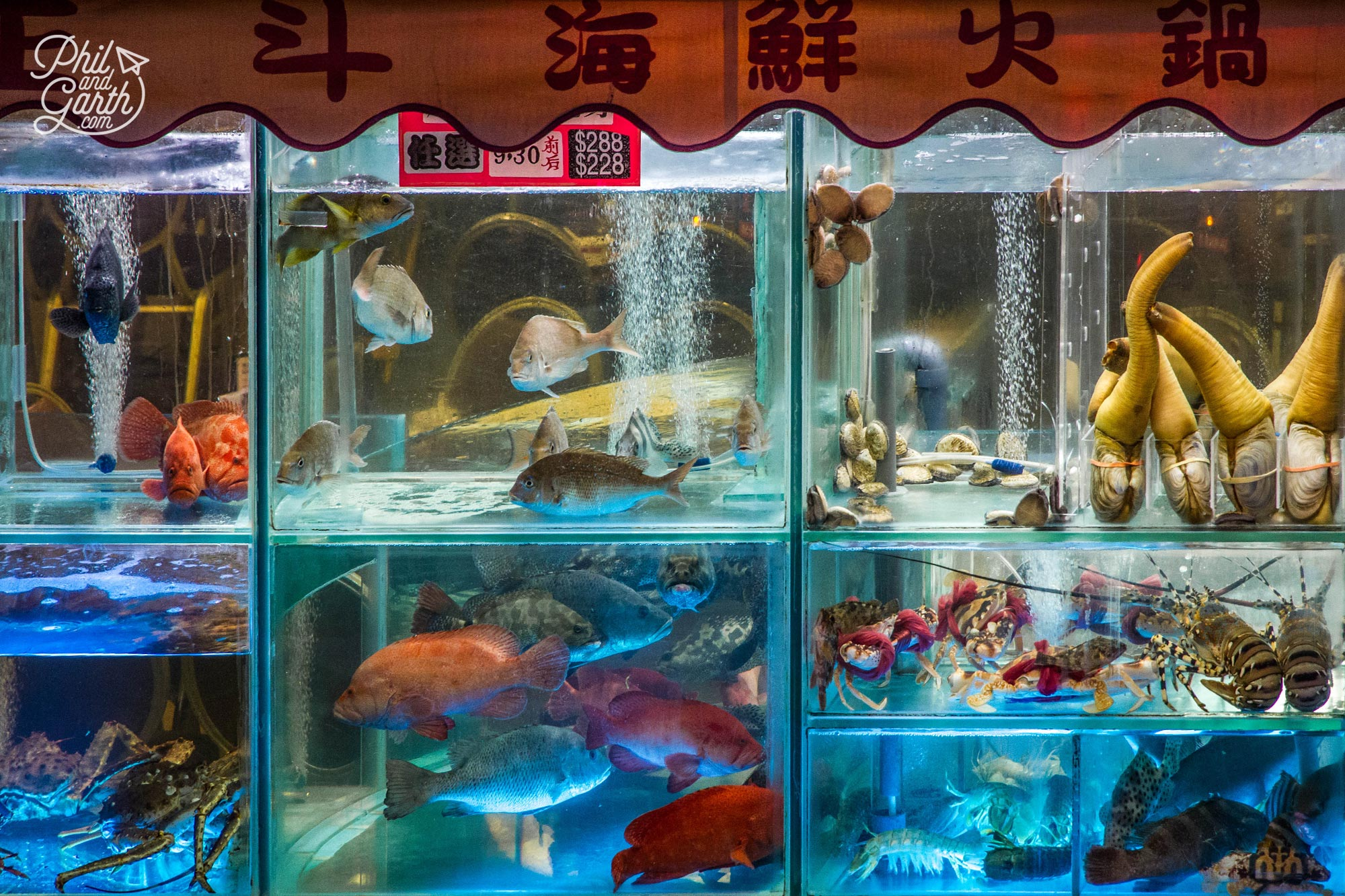 Spot the scary looking fish for sale!