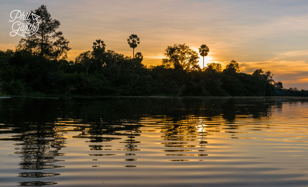 Cambodia's distinct fan shaped Sugar Palm Trees