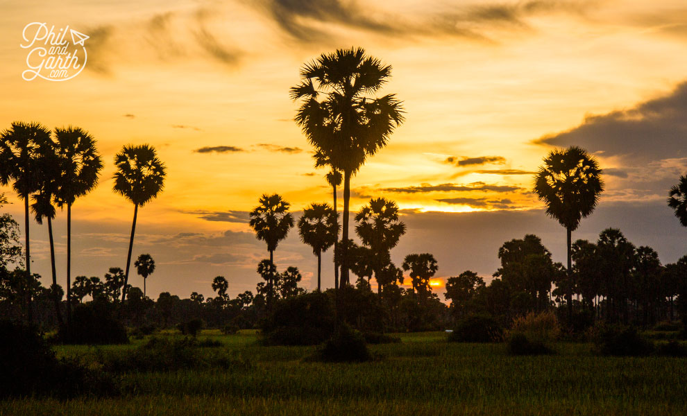 Lovely sunset and sugar palm trees in the countryside