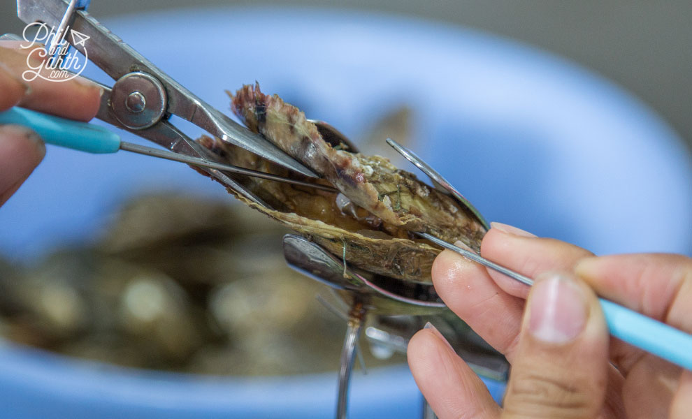 Performing surgery on an oyster