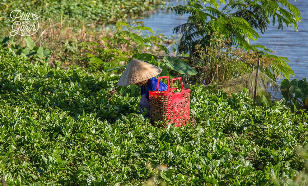 Farmer in Hue countryside