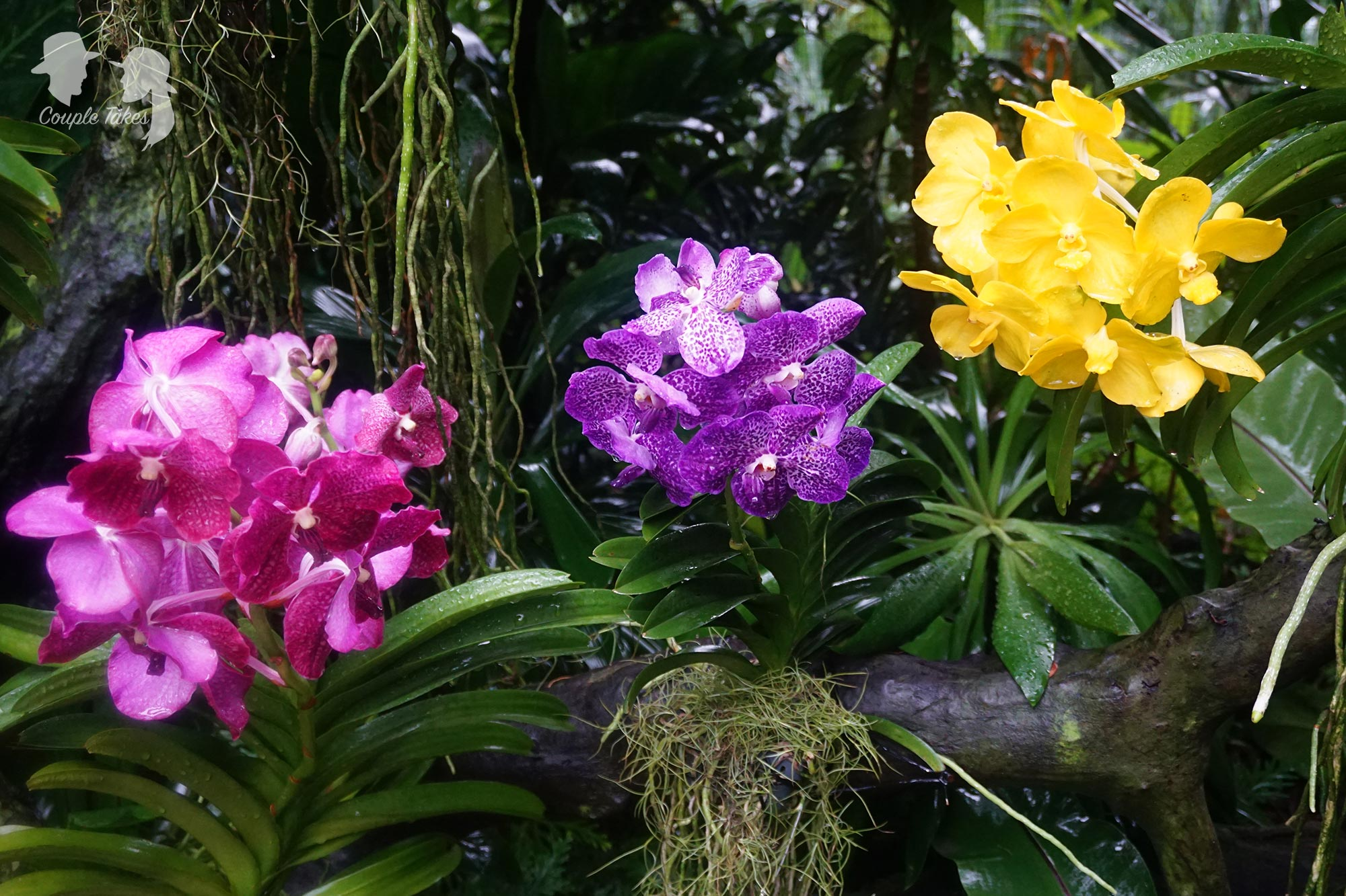 Orchids in Singapore's National Orchid Garden