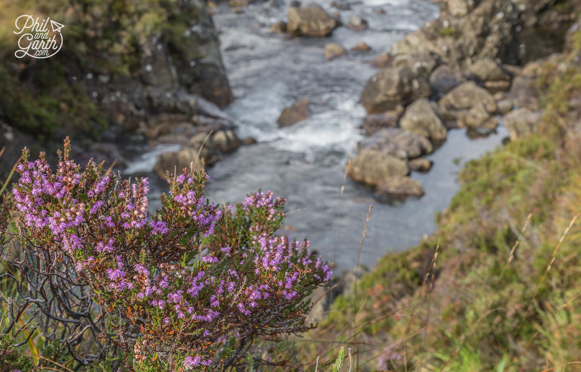 September is the perfect month to see Scottish heather in full bloom