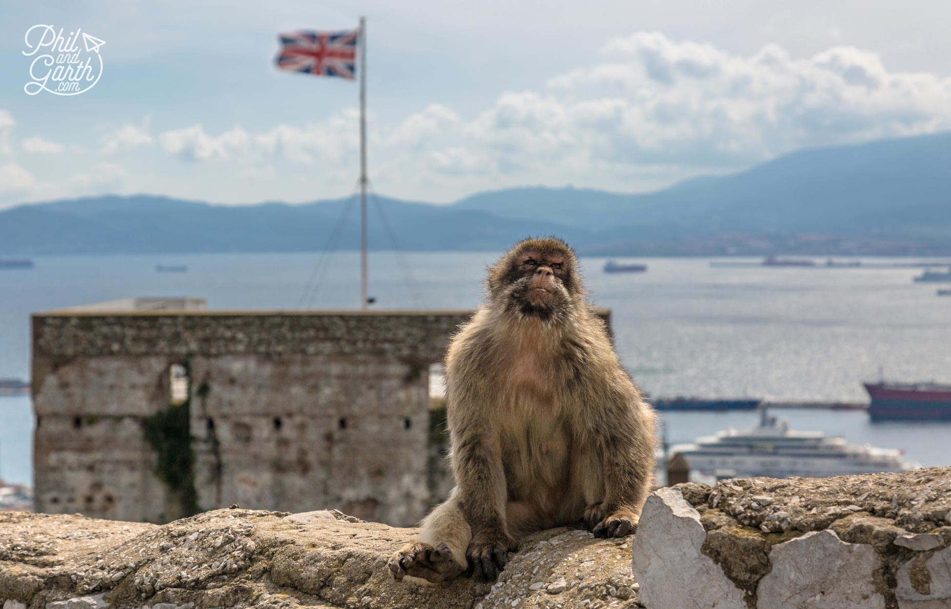 A barbary macaque sunning himself next to the castle