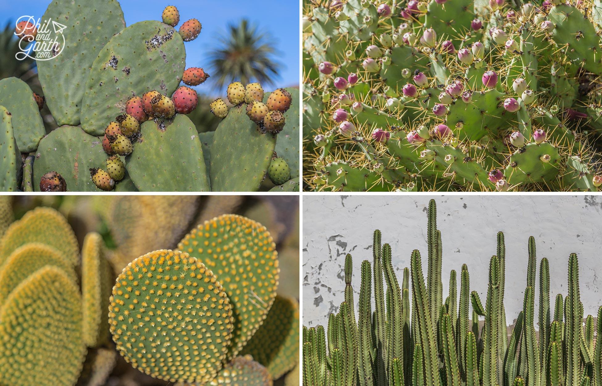 Impressive cactus plants