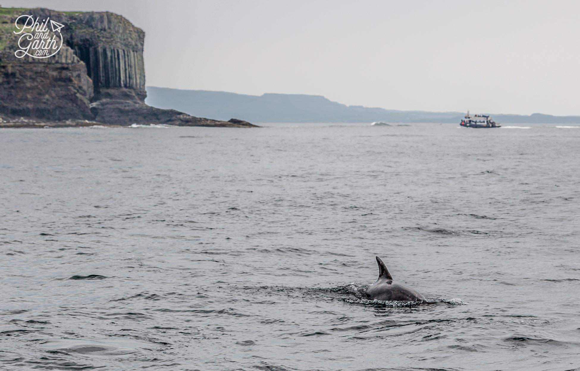 A pod of dolphins join use as we leave Staffa