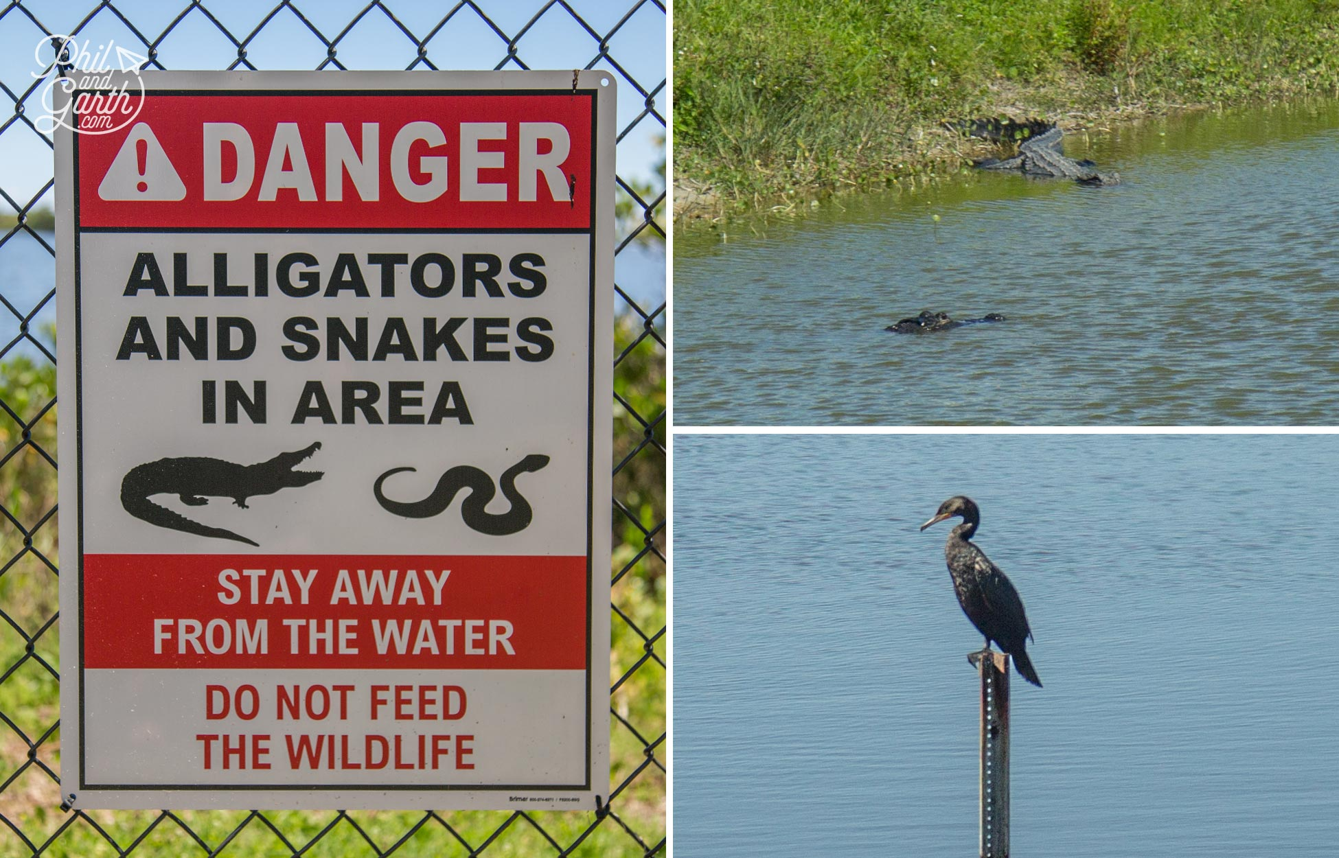 Alligators and wildlife at The Kennedy Space Center