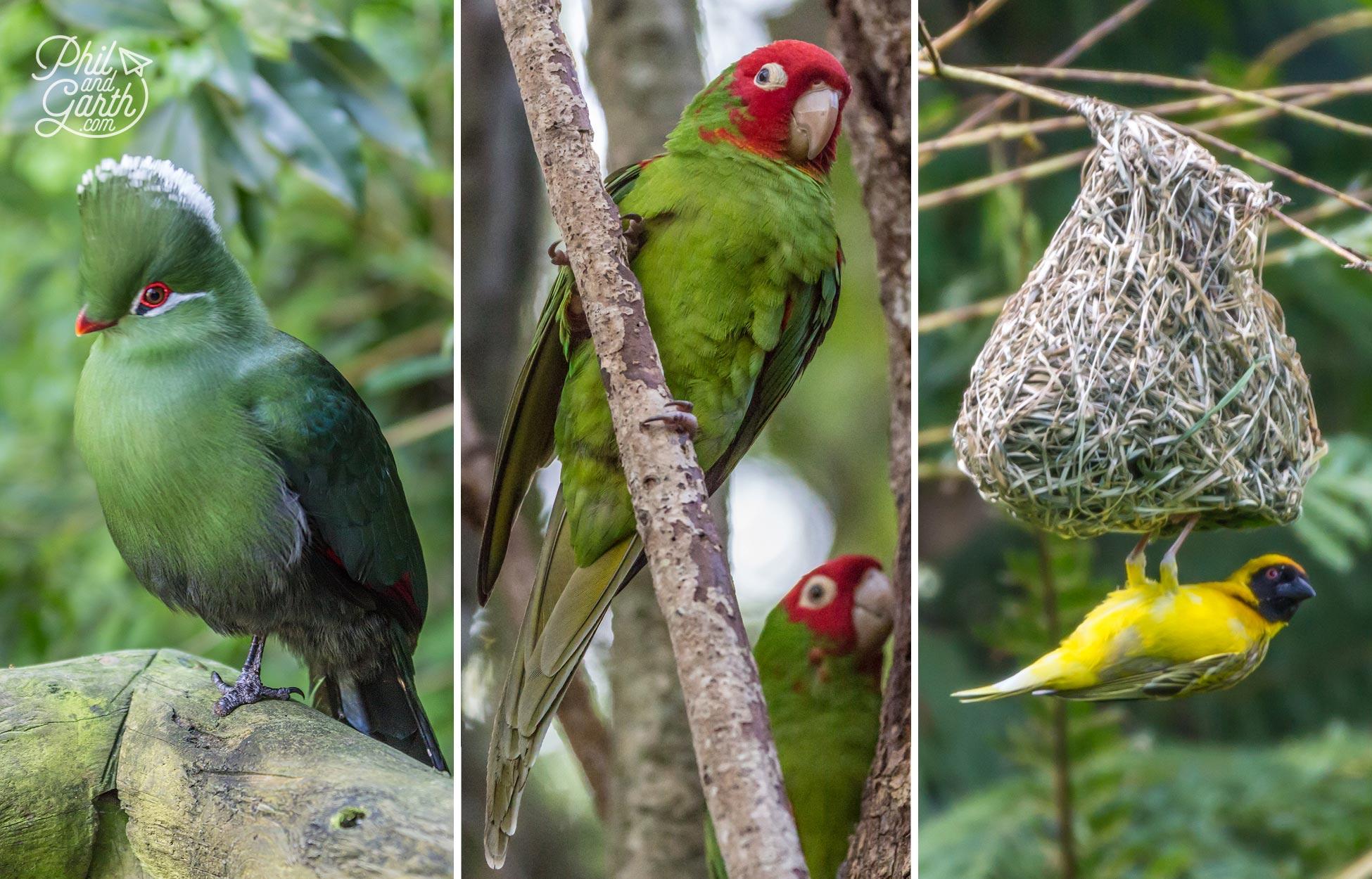Exotic birds in Bird's Of Eden, Plettenburg Bay