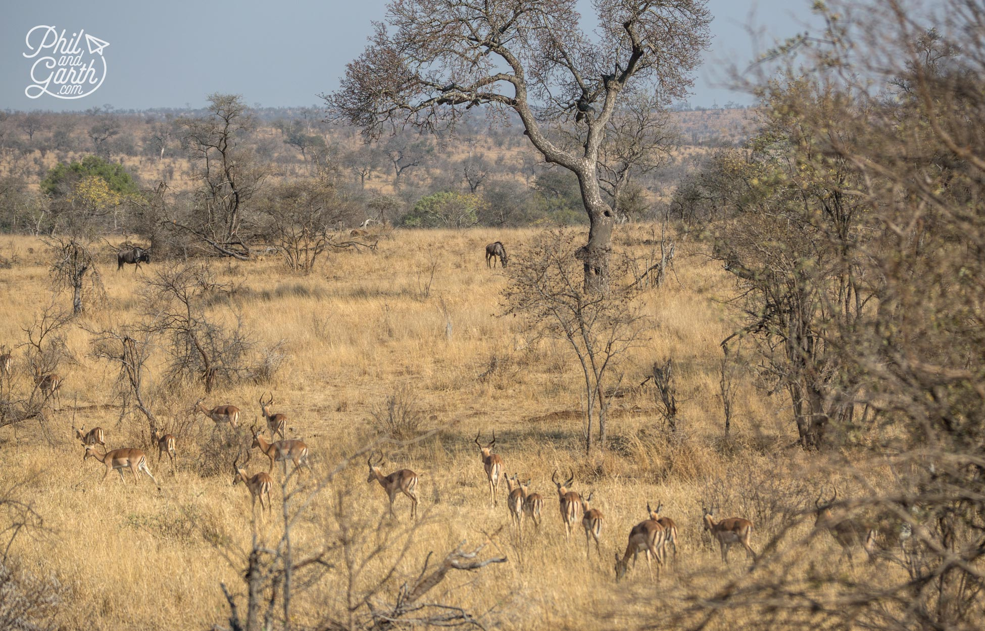 The vast wilderness of Kruger National Park