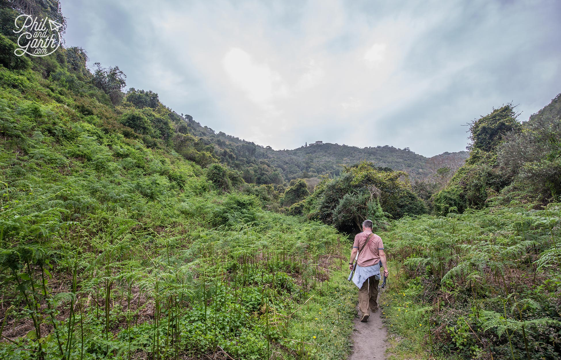 Phil walking through a fern lined path