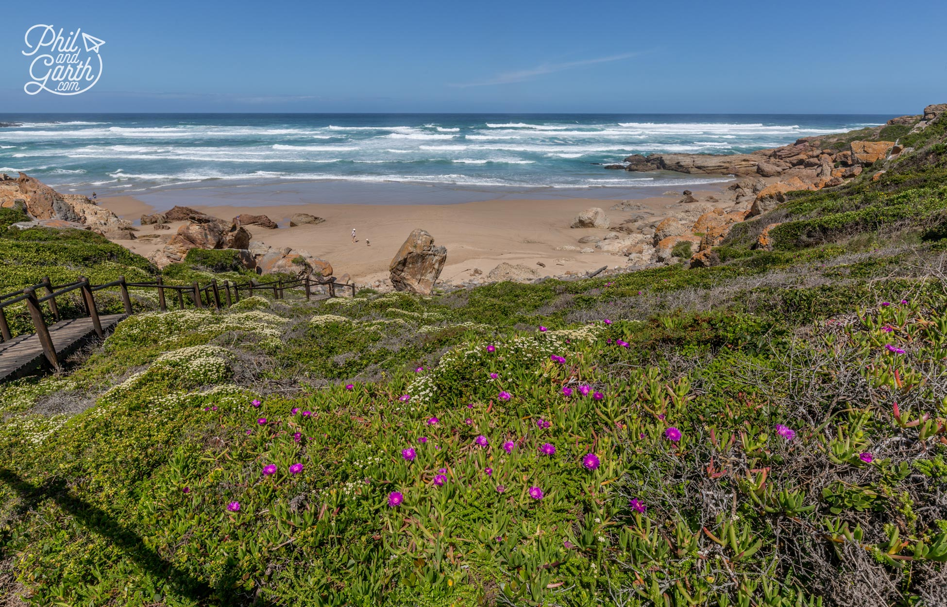 The Garden Route - Wildflowers at Robberg Nature Reserve in Spring (September-December)