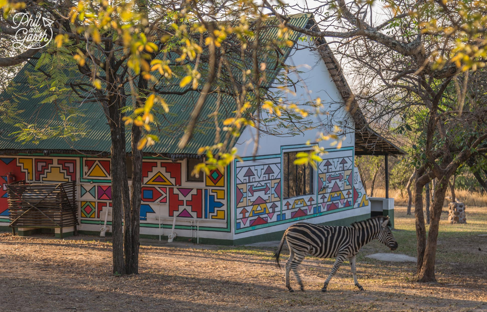 A zebra wanders around our safari accommodation
