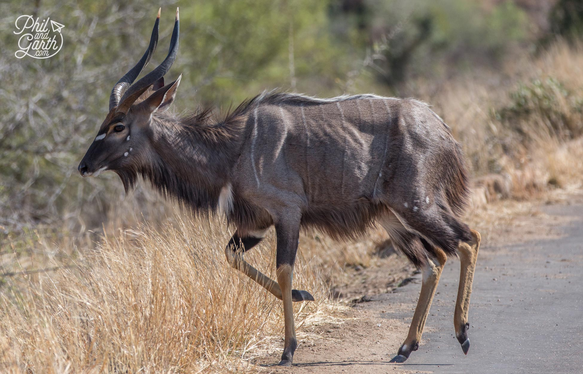 This handsome chap is a Nyala
