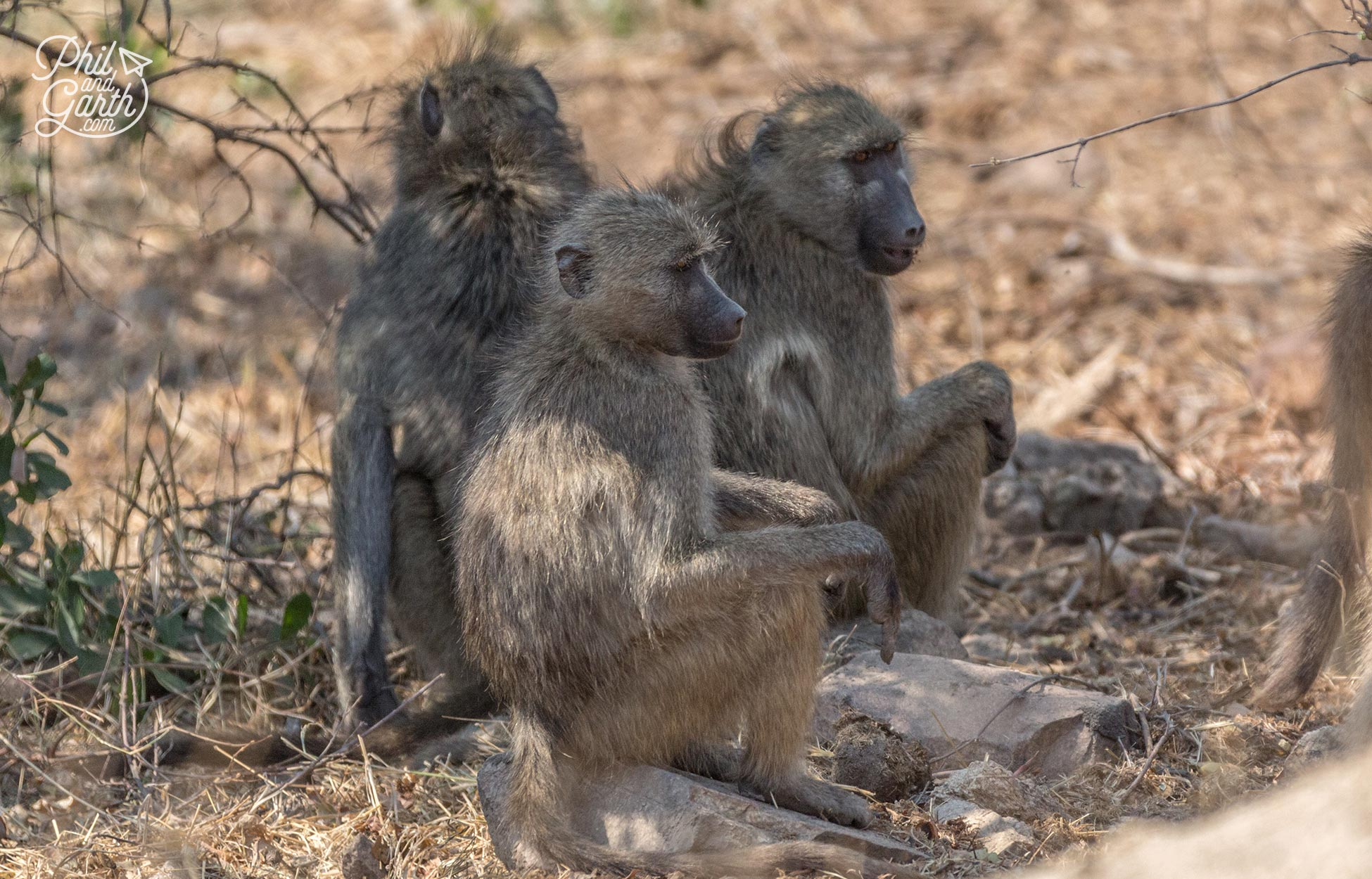 2 day Kruger National Park Safari - Baboons in Kruger National Park