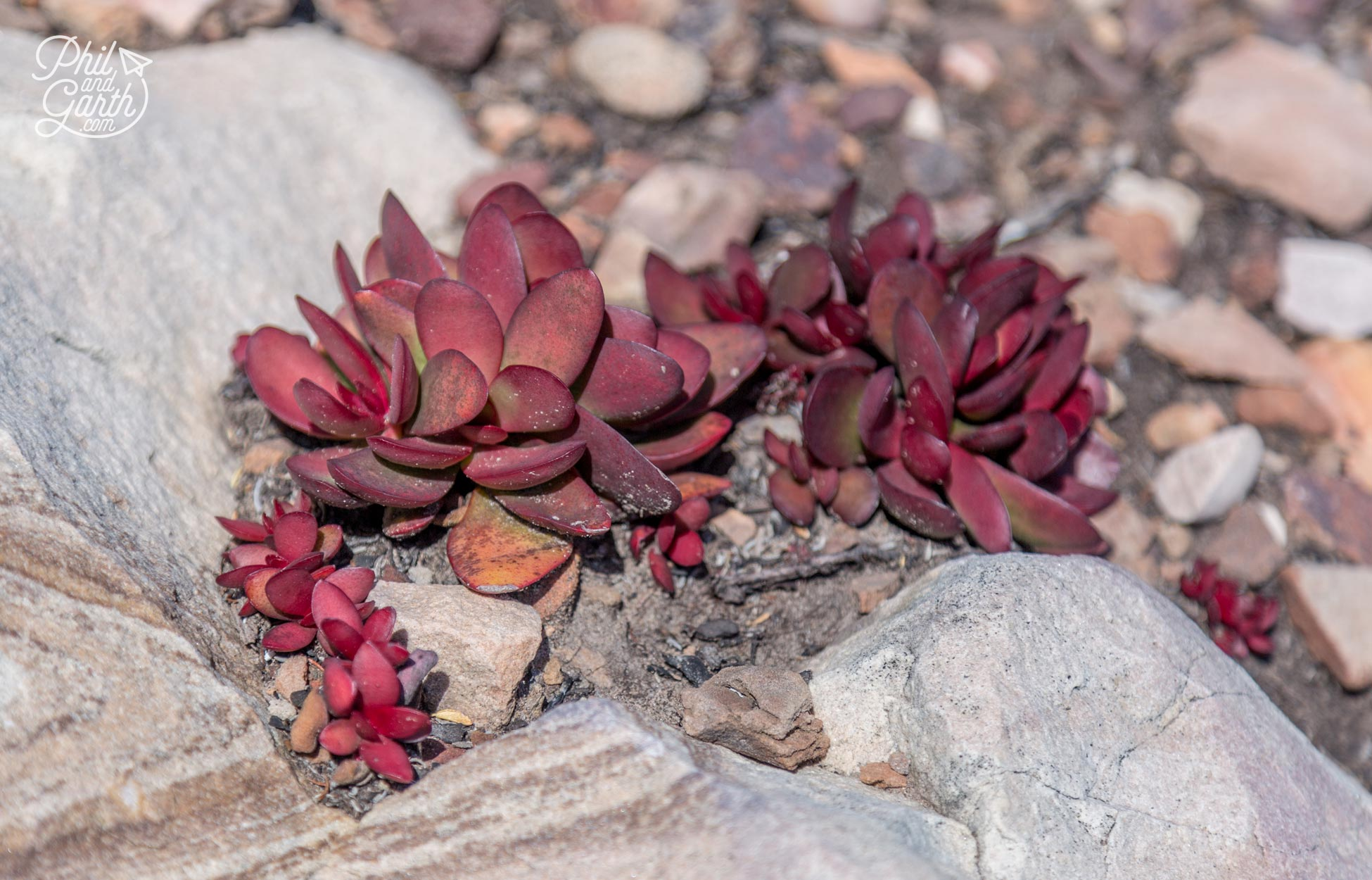 The Garden Route - Delicate alpine looking plants in the rock