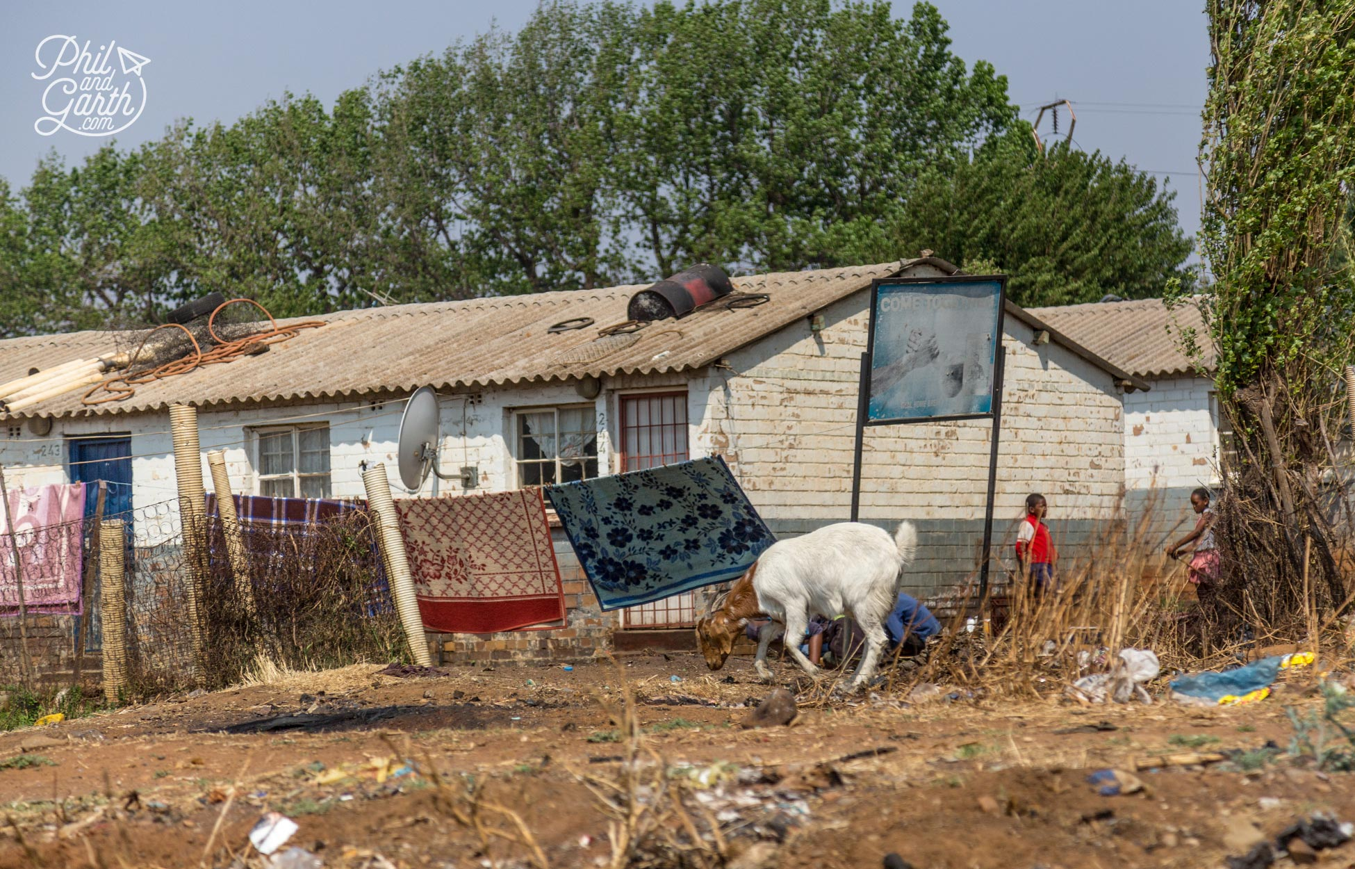 A goat roams the land outside a failed government housing project