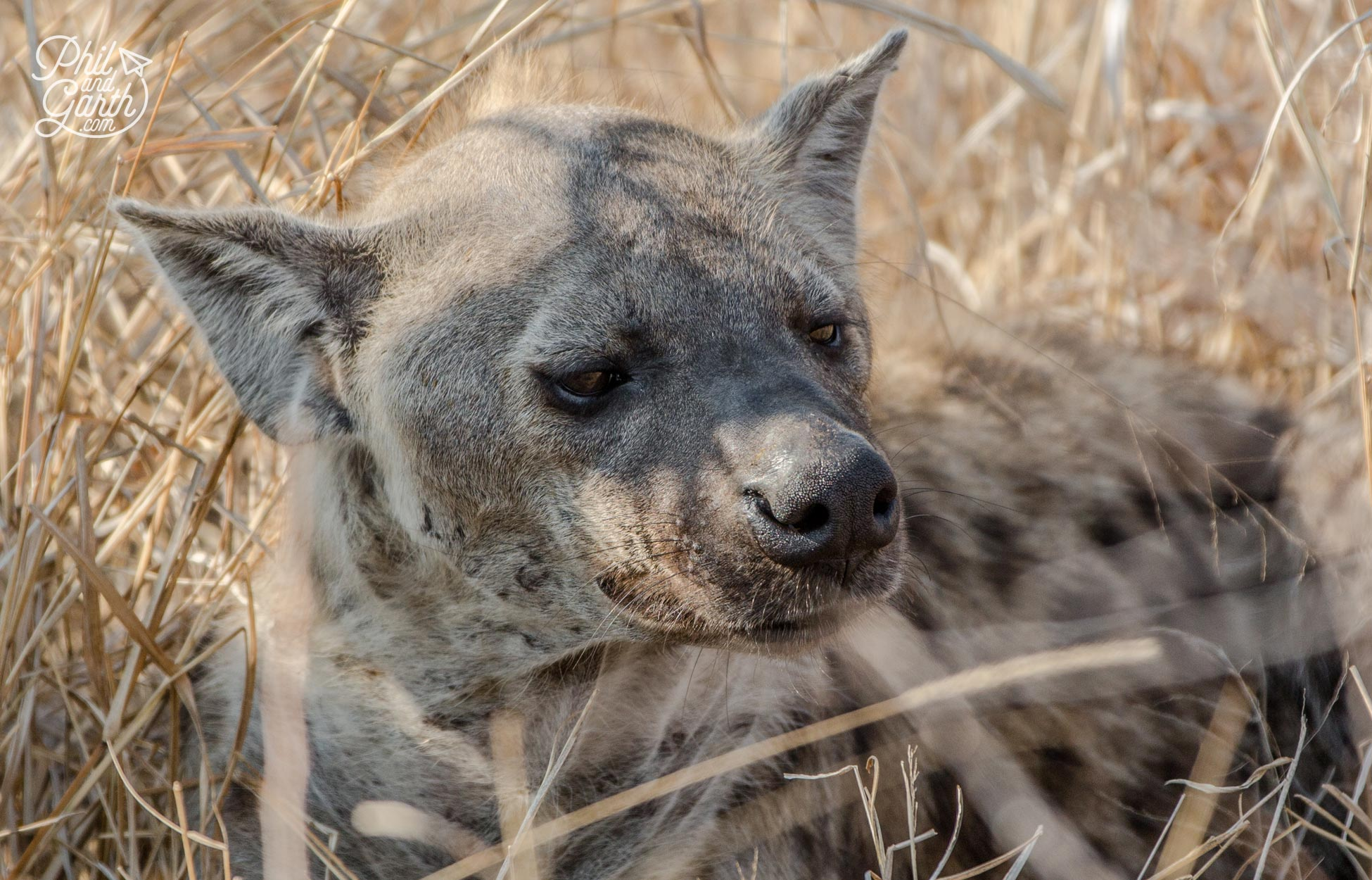 2 day Kruger National Park Safari - Our first spot - Hyena sleeping in the bush