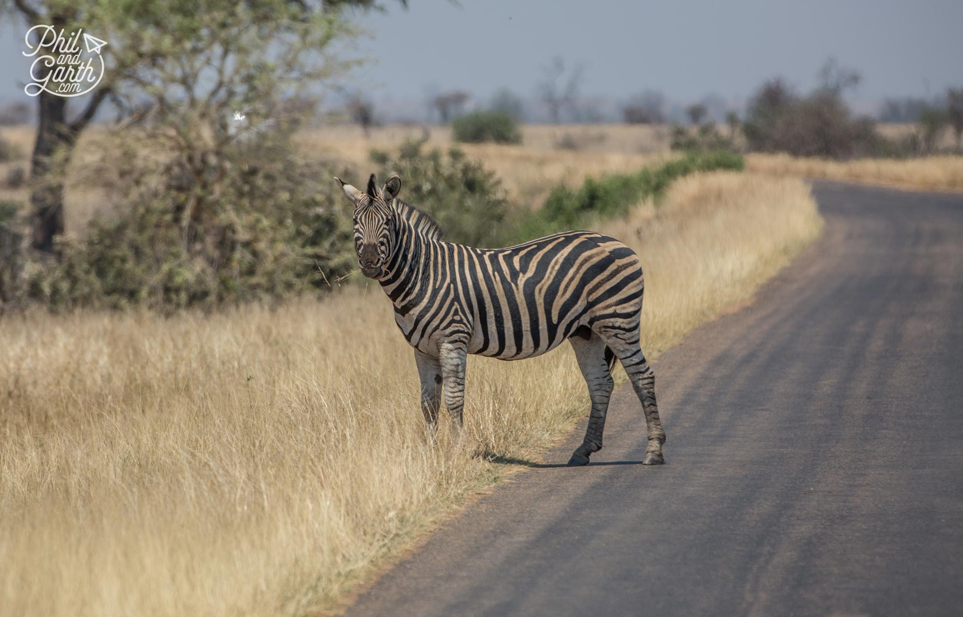 2 day Kruger National Park Safari -Yep it's a zebra crossing!