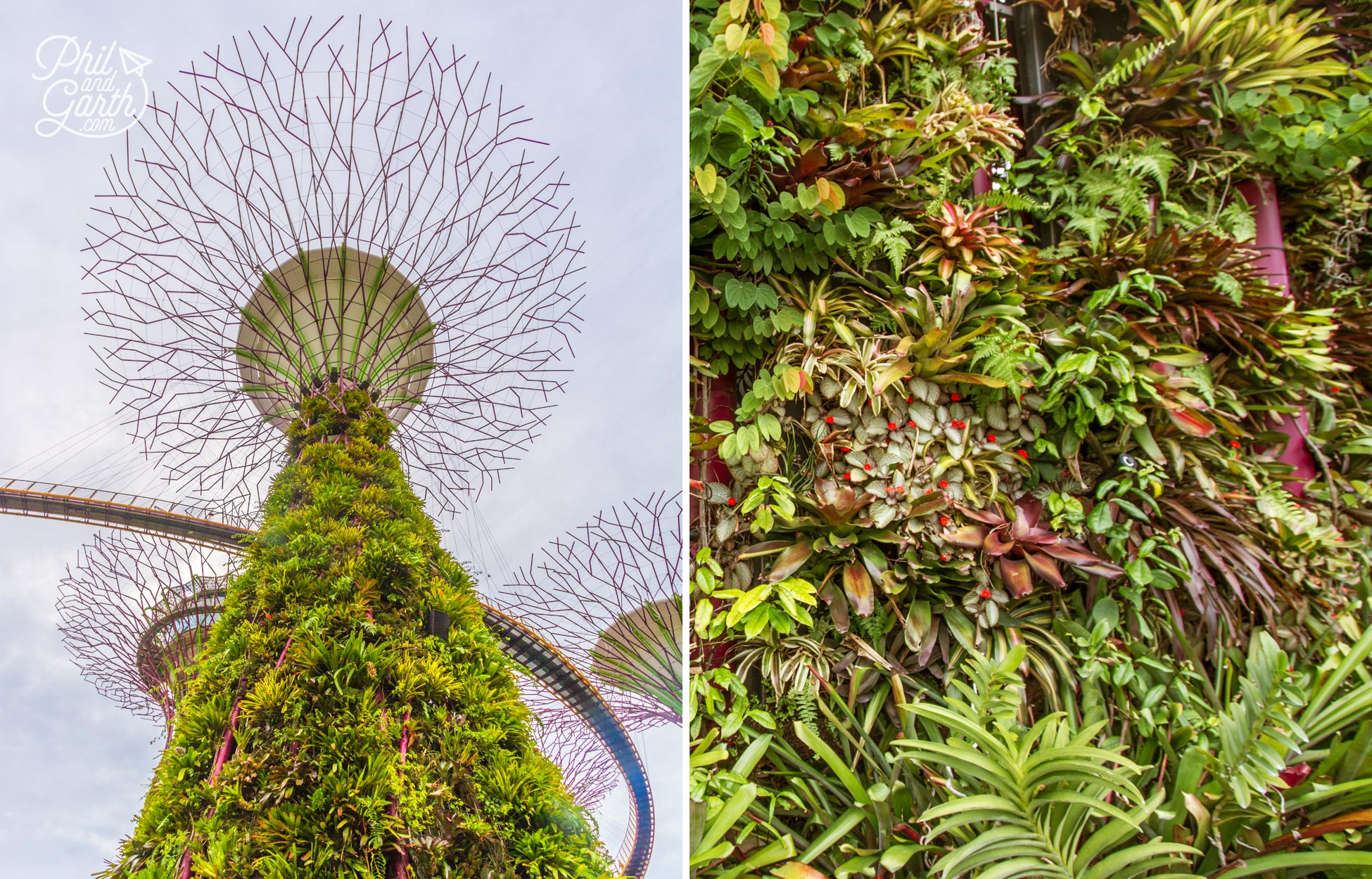 Incredible vertical planting on the Supertrees