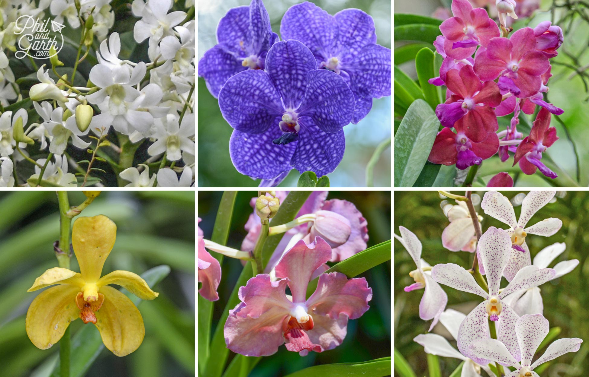Different types of orchids plants