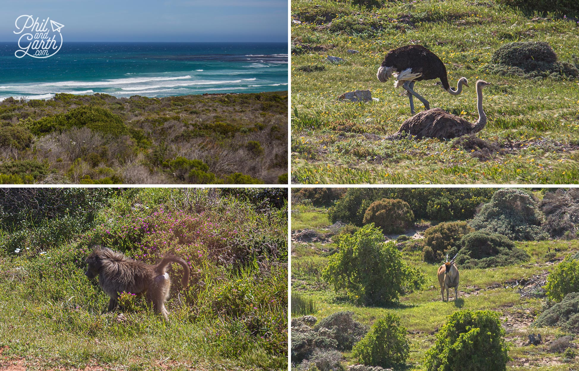 Lots of wildlife at the Cape Point Nature Reserve
