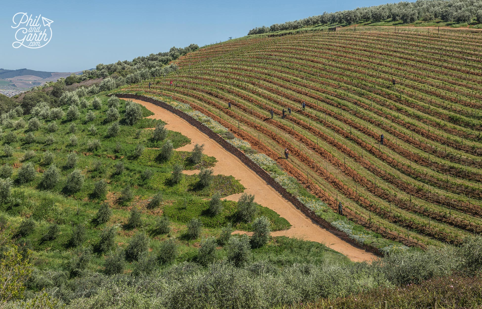The Tokara estate's stunning landscape