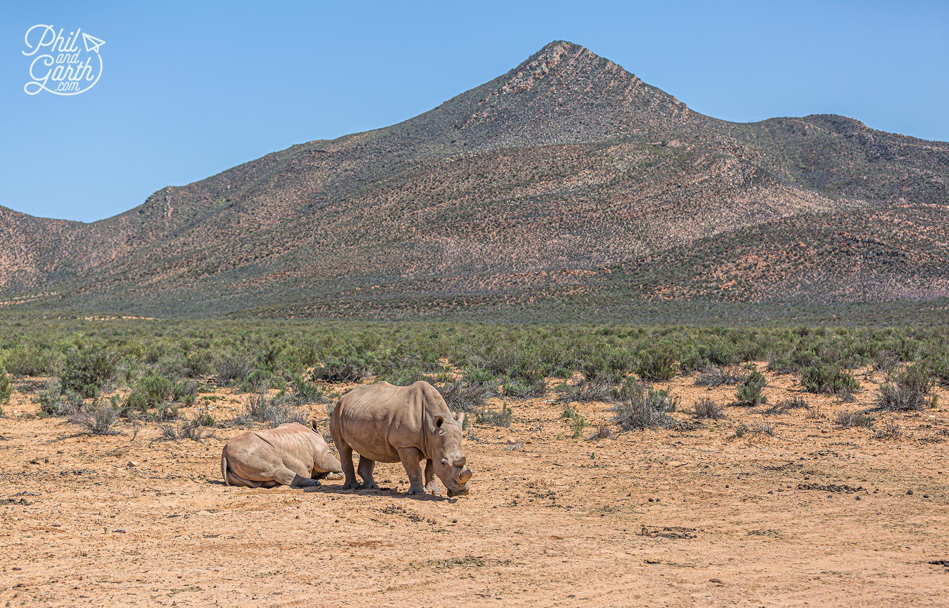 2 Rhinos at the Aquila Game Reserve