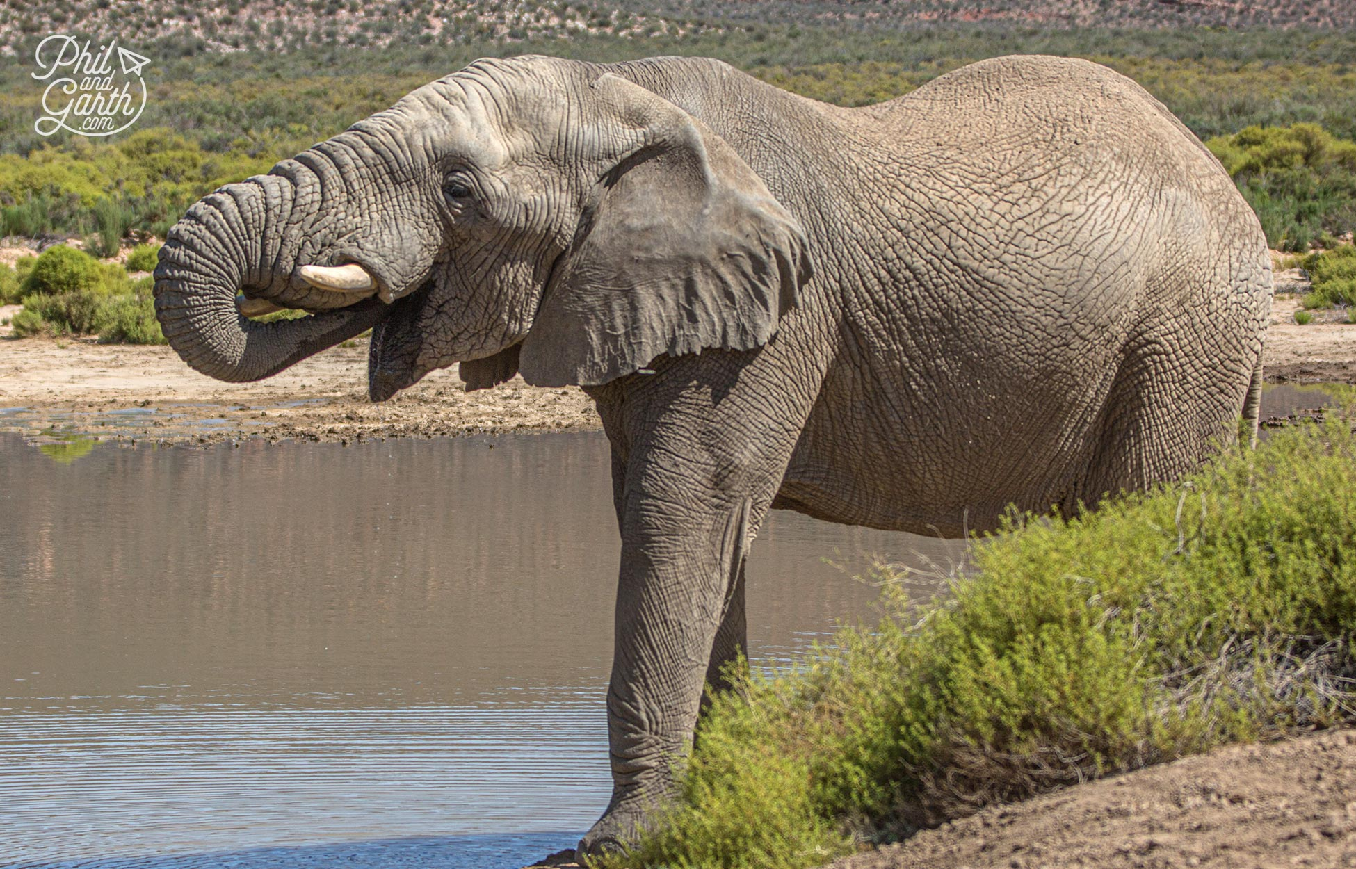 An elephant drinking some water at the lake